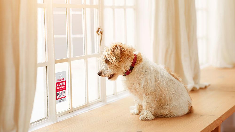 allarme casa pet friendly